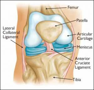 Knee Injury to the Ligaments