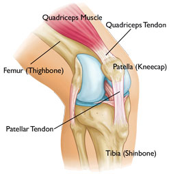 Patella or Knee Anatomy Pain Points